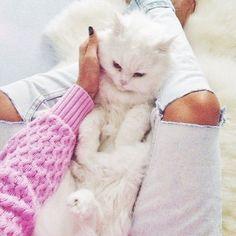 Imagem de cat, pink, and animal