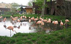 Calgary Zoo, Calgary, Alberta, Canada