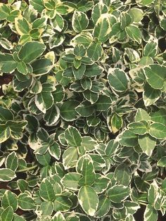 25 Small Shrubs for Landscaping Tight Spaces : Outdoors : Home & Garden Television