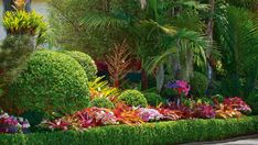 Visitors To Pas And Jim Southons Garden In Howick, Auckland Are Greeted By Towering Bangalow And Queen Palms, Which The Shade Brightly Hued Bromeliads, Petunias And Impatiens. Bromeliads Garden, Bromeliads Landscaping, Tropical Garden, Outdoor Patio Designs, Patio Design, Bromeliads, Outdoor Gardens, Tropical Landscaping, Garden