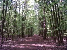Der Wald bei Düsseldorf