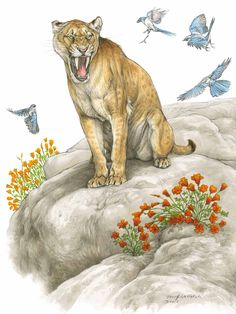 002 Ice age mammals Saber Tooth Tiger Google Search
