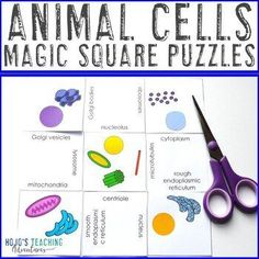 Animal Cells Activity or Game for Life Science Lesson or Review | 10th, 5th, 6th, 7th, 8th, 9th, Activities, Biology, Games, Homeschool, Science, Centers - A fun, hands on and engaging way to practice #science (fifth, sixth, seventh, eighth, ninth, tenth graders, Year 5, 6, 7, 8, 9, 10 - upper elementary, middle school, high school) #ScienceCenters #AnimalCells #LifeScience Science Ideas, Science Lessons, Life Science, Cells Activity, Science Centers, Animal Cell, Next Generation Science Standards, 5th Grade Classroom, Science Student