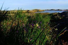 Blumen und Küste an Verdens Ende