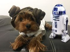 #Repost @fourlittlenewyorkies  Help me Obi-Wan. Youre...