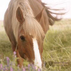 The Quiet Horse bymarie bb | photographie