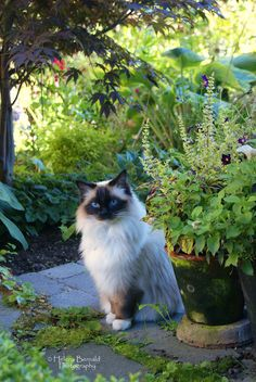 beautiful cat in a garden | photo by Helena Bernáld @ The Swenglish Home