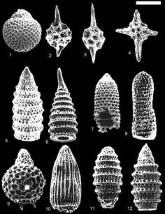 microfossils - Google Search