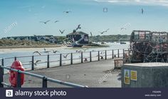 Download this stock image: Seagulls flock above Mudeford Quay, Christchurch, Dorset, UK. Taken on 29th September 2015. - F5DAR9 from Alamy's library of millions of high resolution stock photos, illustrations and vectors.