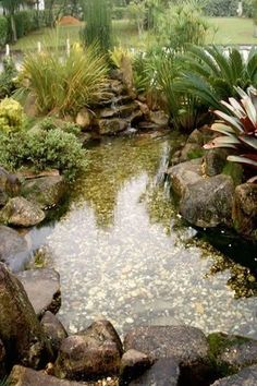 Peixe & Vida: Lagos Ornamentais, Fontes, Peixes e Aquários #Ponds
