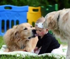 Goldens are so sweet!