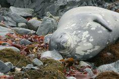 Halfmoon Island, South Shetland Islands. #OceanwideExpeditions #PhotoContest
