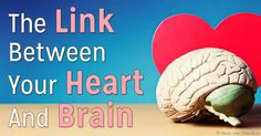 Your heart contains neurons, similar to those in our brain -- your heart and brain are actually closely connected, creating a symbiotic emotional whole.