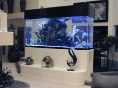 built in saltwater tank | The first step in saltwater aquarium set up is choosing a location ...