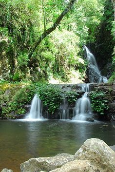 Waterfalls at O'Reilly's & Lamington National Park Brisbane Qld. Brisbane Queensland, Queensland Australia, Australia Travel, Brisbane News, Rock Pools, Science And Nature, Gold Coast, Amazing Nature, Aussies