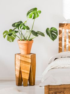 Monstera plant care is less complicated than you'd think. Here, the experts share their top tips. Plant Aesthetic, Monstera Deliciosa, Bedroom Plants, Outdoor Plants, Plants Indoor, Indoor Gardening, Potted Plants, Foliage Plants, Hallway Decorating