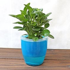 Mkono 3 Pack Self Watering Planter Plastic Flower Pot, Blue ** Check This  Awesome