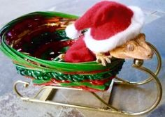 Ten Weird and Exotic Animals Wearing Santa Hats Christmas Hat, Christmas Animals, Christmas Photos, Merry Christmas, Cute Reptiles, Reptiles And Amphibians, Unusual Animals, Cute Animals, Exotic Animals