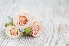 Before, Weddings, Elopements, Honeymoons   www.weddingsnorthcarolina.us/activities/before   You will find numerous options for activities listed here which are well suited for the days after your wedding and during your honeymoon vacation.