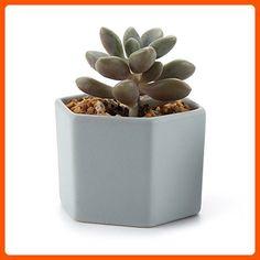 T4U 2.75 Inch Ceramic Six Sizes Semi Luster Surface succulent Plant Pot/Cactus Plant Pot Flower Pot/Container/Planter Matt glossy - Lets plant (*Amazon Partner-Link)