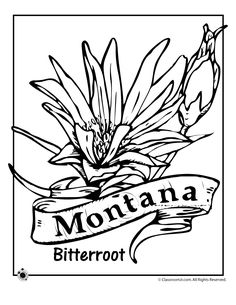 State Flower Coloring Pages Michigan State Flower Coloring Page