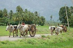 """Village Life Pure Life  . . Punjab Pakistan  .. Follow me here and My Fb id is """"MrZeshan"""" Village Photography, Couple Photography, Bullock Cart, Hindi Qoutes, Rural India, Indian Village, God Pictures, Natural Life, Life Photo"""