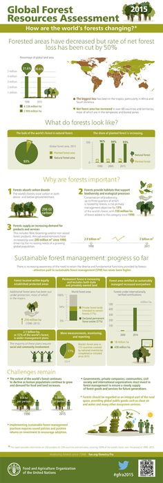 Net forest loss is down 50%! Check out this infographic from the United Nations to see how else the world's forests are changing.