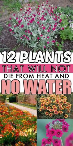 Low Water Plants | These low maintenance landscaping plants are the perfect way to add curb appeal to your home. They'll survive droughts and have so much color! #plants #landscape #landscaping #garden #gardening Low Maintenance Landscaping, Low Maintenance Plants, Garden Yard Ideas, Lawn And Garden, Mailbox Garden, Garden Junk, Full Sun Garden, Garden Farm, Garden Pallet