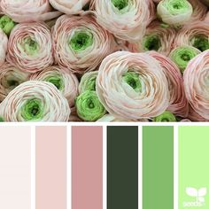today's inspiration image for { ranunculus hues } is by @fairynuffflowers ... thank you, Steph, for another gorgeous #SeedsColor image share!