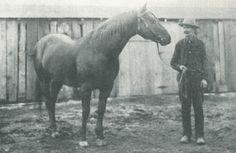 Peter McCue: The Greatest of the Great - Western Horseman Big Horses, Black Horses, My Horse, Andalusian Horse, Friesian Horse, Arabian Horses, Palomino, American Quarter Horse, Quarter Horses