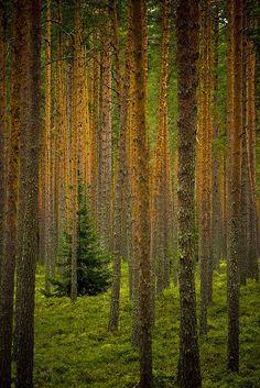 TREEEES