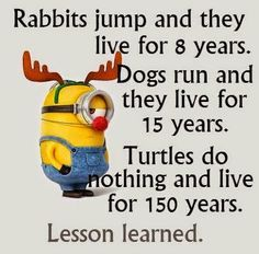 Minions has been one of the extremely hilarious and funny animated movies for all of us which had surely made entire globe fan of it because of the hilarious. Here are 26 Minions Memes exercise Really Funny, Funny Cute, The Funny, Funny Shit, Funny Stuff, Super Funny, Funny Minion Memes, Minions Quotes, Funny Texts