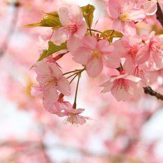 【nasakura.japan】さんのInstagramをピンしています。 《【大和言葉:綴る(つづる)】 作文することを「綴る」と言います。言葉の響きがいいですね。 元の意味は糸などを繋ぎ合わせていくということで、単に「書く」のではなく、一つ一つ丁寧に作文していくことをイメージさせる言葉です。 「思い出をつづる」「悲しみを綴る」のように心情を表現するのに使うといいですね。  毎日Facebookに投稿することも、現代風の「綴る」かも知れませんが、やはり筆を手に手書きで書いていくことを思い浮かべます。 🌸  Japanese Beauty in Daily Life ♡日本の日常の美を伝える #591  奈奈より♡ Photo by Photo-AC ☆.。.:*・°☆.。.:*・°☆.。.:*・°☆.。.:*・°☆ 奈桜 NasakuraのFacebookページです。 「いいね」いただけましたら嬉しいです。 ⇒ https://www.facebook.com/nasakura39/ 『定年前に夫婦で始める月商300万円のスモールビジネス』…