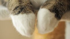 hand_cat12