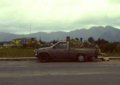 The Pineapple Express #Oaxaca