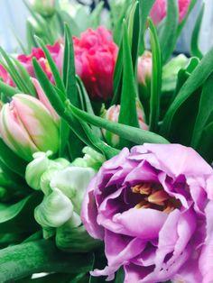 Tulips - Flowerful Springtime