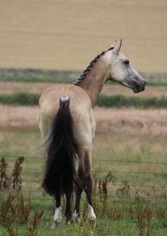 Solaris Sport Horses