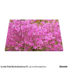Lovely Pink Rhododendrons Floral Canvas Print