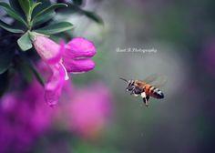 https://www.facebook.com/AuntBPhoto  http://auntbphotography.tumblr.com/