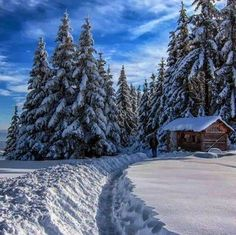 the same trees with snow.nice so nice SNOW nice snow Winter Love, Winter Snow, Winter Christmas, Winter White, Christmas Trees, Beautiful World, Beautiful Places, Beautiful Scenery, Foto Picture