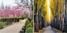 Kööpenhaminan Nørrebro on yksinkertaisesti erinomainen Helsinki, Sidewalk, Sidewalks, Pavement, Walkways