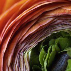 Harald Gach | Photographs Vienna, Spinach, Cabbage, Photographs, Vegetables, Flowers, Food, Photos, Essen