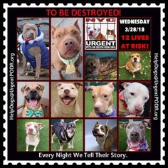 TO BE DESTROYED 03/28/18 - - Info  Tonight's list has been posted. -  Click for info & Current Status: http://nycdogs.urgentpodr.org/to-be-destroyed-4915/