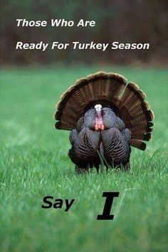 Turkey Fever
