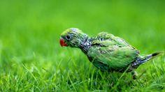 Картинки по запросу parrot