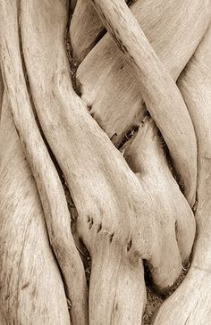 Driftwood by Henry Domke Fine Art Organic Art, Organic Shapes, Patterns In Nature, Textures Patterns, Business Yoga, Hamptons Style Decor, Texture Design, Wood Texture, Texture Photography