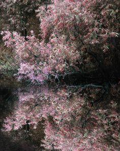 Spring Reflection by FantasyAvenue.deviantart.com on @deviantART