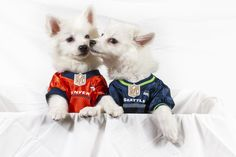 66 Best Dog Sports Gear images  2698261dc
