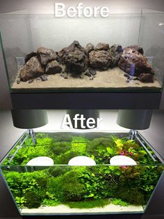 I've been on this site for a long time and never made an account. My brother told me I should share my aquarium. What do you guys think? I've been on this site for a long time and never made an account. My brother told me I should share my aquarium Aquarium Landscape, Nature Aquarium, Aquarium Terrarium, Planted Aquarium, Aquarium Aquascape, Aquascaping, Amazing Aquariums, Aquarium Design, Aquarium Fish Tank