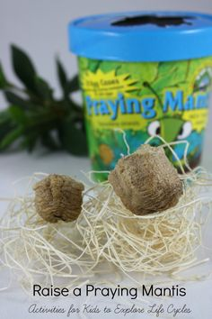 Try these activities with children as you examine the life cycle of a praying mantis in your home or classroom. A fun way to learn about life cycles! Insect Activities, Science Activities For Kids, Animal Activities, Preschool Science, Teaching Science, Science Projects, Educational Activities, Life Science, Preschool Activities